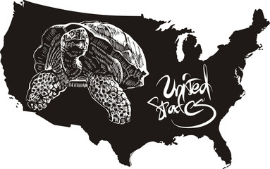 Turtle and U.S. outline map