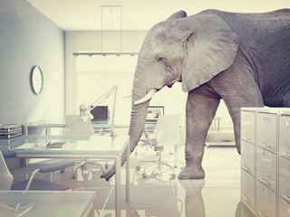 elephant in a room Wall mural