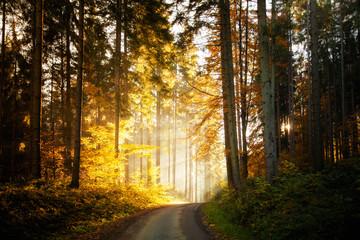 Beautiful autumn woods landscape