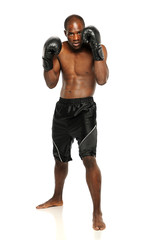 Young African American Boxer