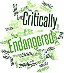 Word cloud for Critically Endangered
