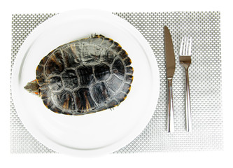 red ear turtle on plate isolated on white