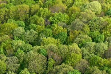 Forest seamless pattern - view from above