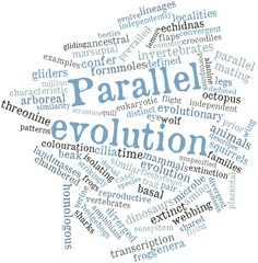 Word cloud for Parallel evolution