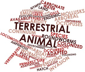Word cloud for Terrestrial animal