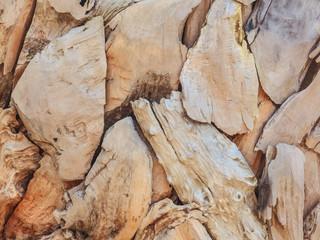 Pieces of beach driftwood