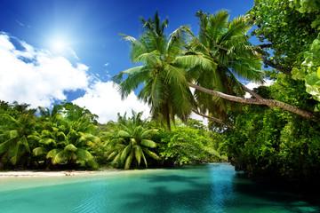 Wall Mural - lake and palms, Mahe island, Seychelles