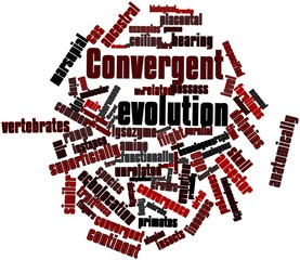Word cloud for Convergent evolution