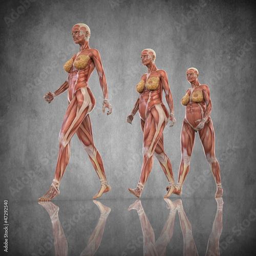Anatomia Mujer Embarazada\
