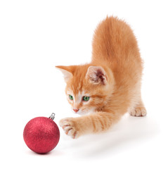 Kitten playing with a Christmas ornament on white.