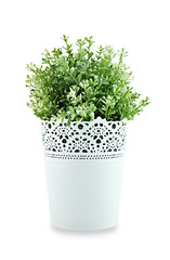 Small ornamental plant in stencil white pot