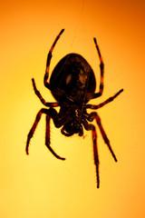Big dark scary spider
