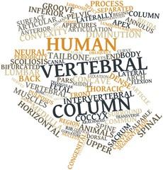 Word cloud for Human vertebral column