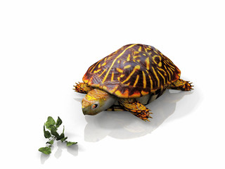 turtle and salad on white background