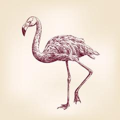 flamingo hand drawn