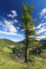 Dolomiti - tree over Cordevole valley