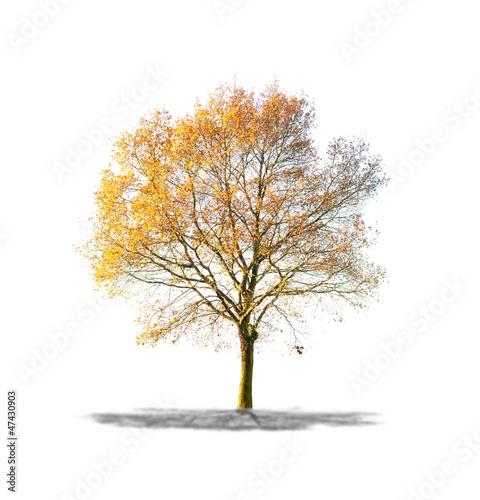 arbre sans feuilles sur fond blanc - Arbre Sans Feuille