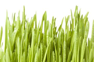 Fresh Green Organic Wheat Grass