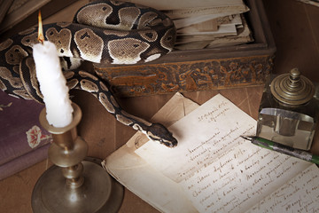 Vintage still life with snake and candle