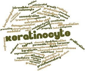 Word cloud for Keratinocyte