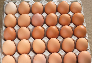 Lot of brown chicken eggs assorted in packaging cells closeup