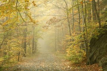 Keuken foto achterwand Bos in mist Autumn beech forest in the fog