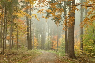 Keuken foto achterwand Bos in mist Forest trail in the mountains on a misty October's morning