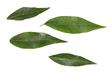 leaves on tangerine