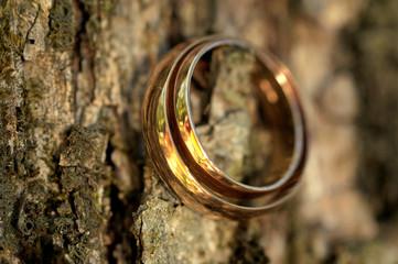 Golden Rings on Bark