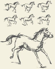Phase of the movement. Horse. Set. Hand-drawn