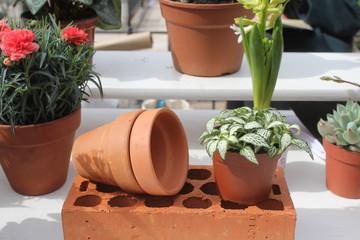 piante con vaso