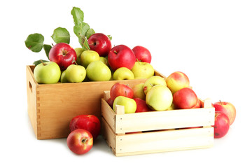juicy apples with green leaves in wooden crates, isolated