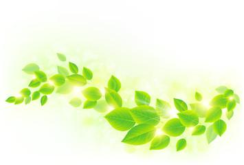 新緑イメージ