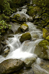 Stream in the rainforest