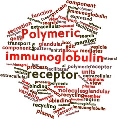 Word cloud for Polymeric immunoglobulin receptor