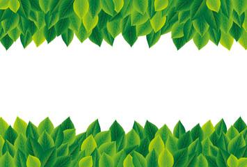 植物フレーム