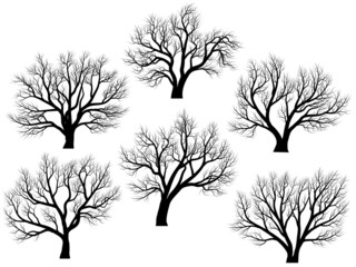 Silhouettes of trees without leaves.