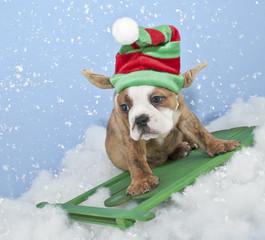 Wall Mural - Funny Bulldog / Elf Puppy