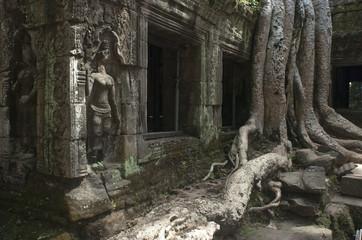 Ta Prohm. Templos de Angkor. Camboya