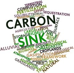 Word cloud for Carbon sink