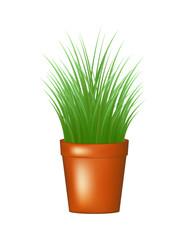 Grass in flowerpot