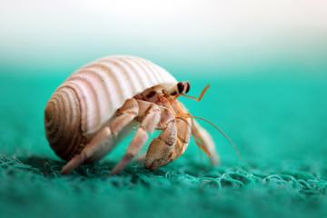 Cute tiny hermit crab running away