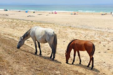 La yegua y su potro en la playa