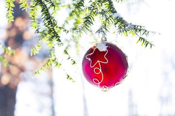 hängende rote weihnachtskugel in nadelästen