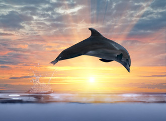 Tuinposter Dolfijnen dolphin jumping above sunset sea