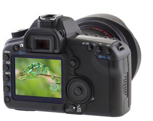 caméléon sur écran appareil photo