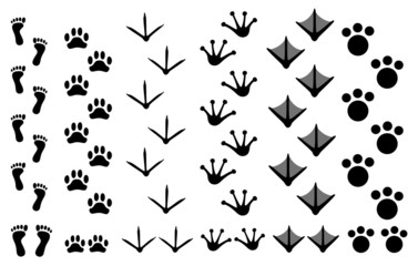 Animal footprints set