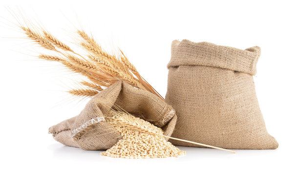 Wheat ears and sack of wheat grains isolated