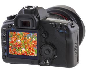 fleurs de flamboyant sur écran de reflex numérique