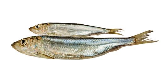 Two Baltic herrings.